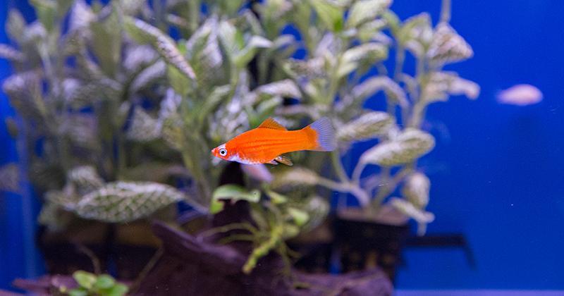 Aquariumafdeling